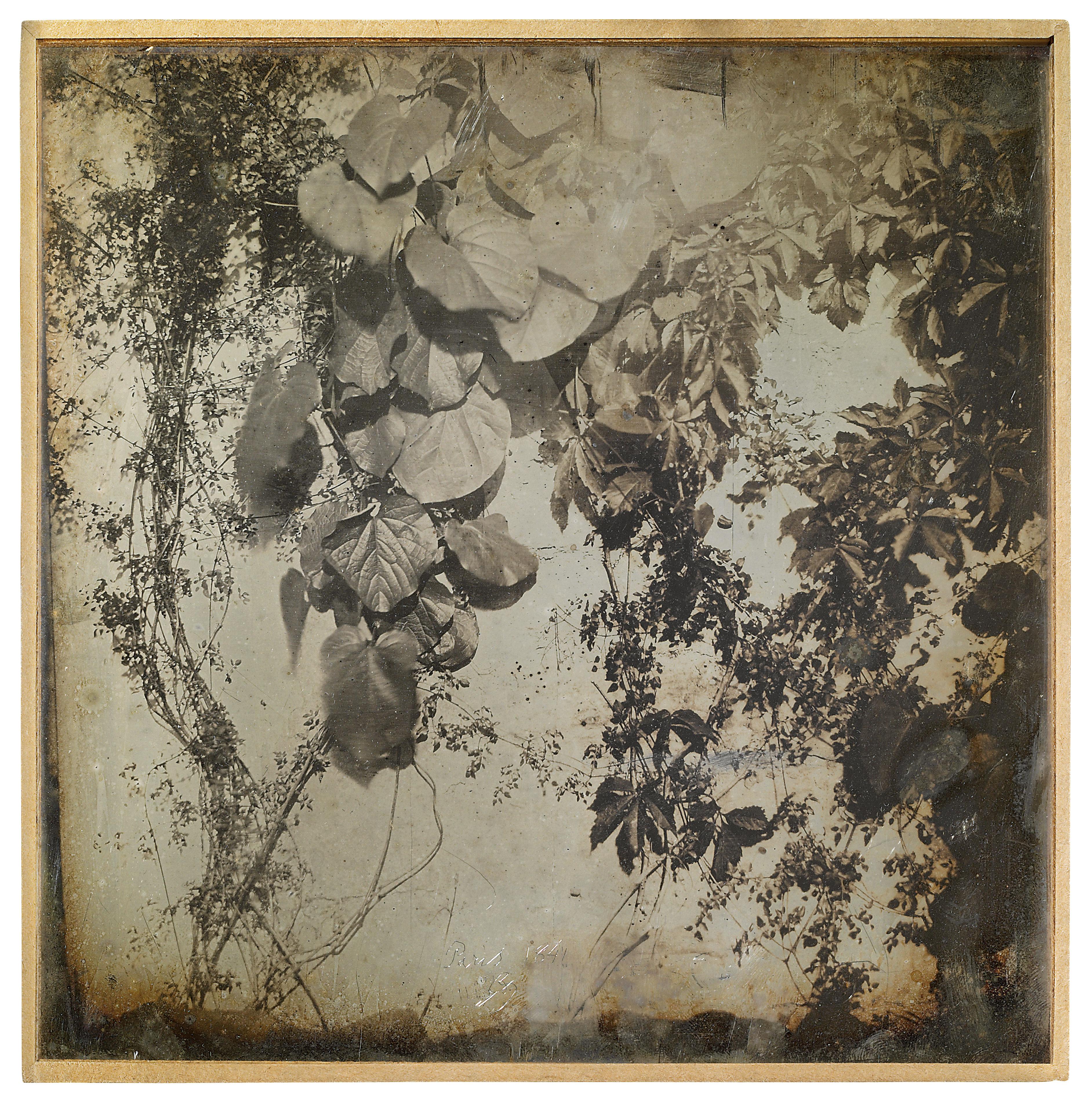 261. Paris. 1841. Etude de plantes.