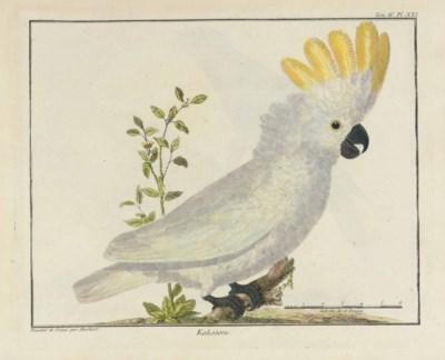 BRISSON, Mathurin Jacques (172