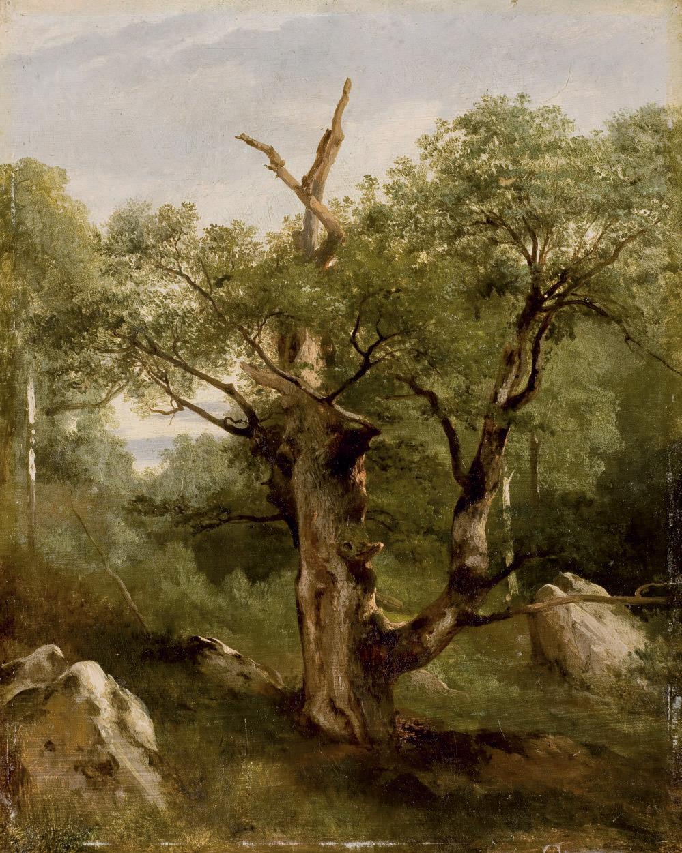 Etude d'arbres