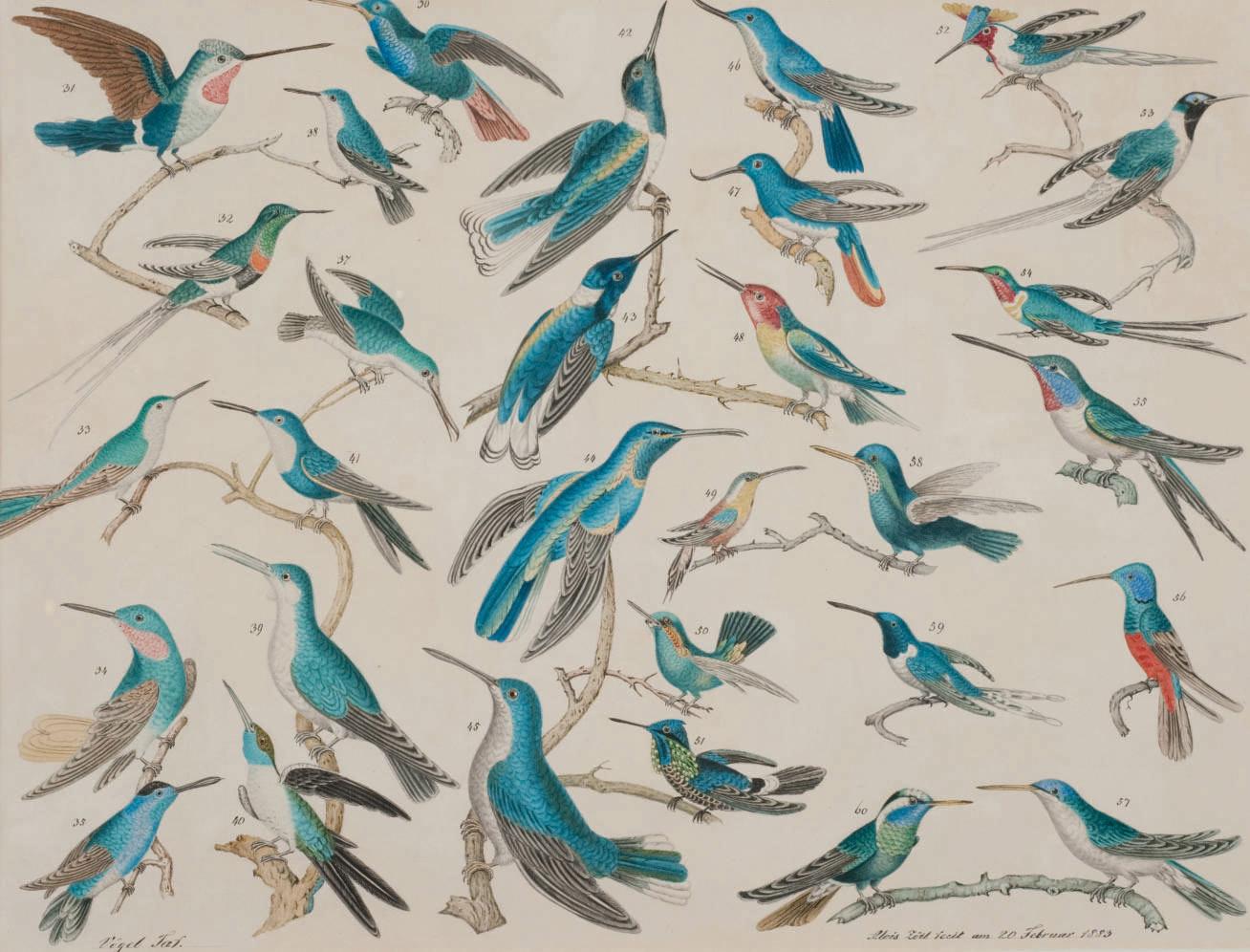 Des colibris