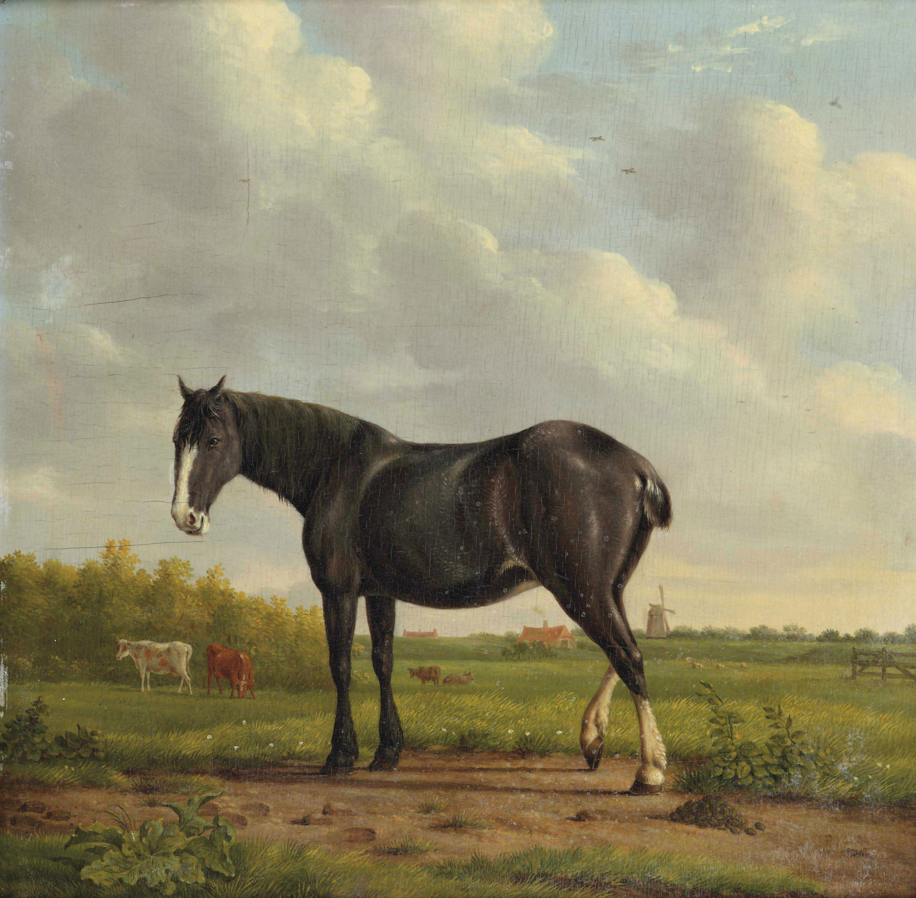 A black horse in a polder landscape