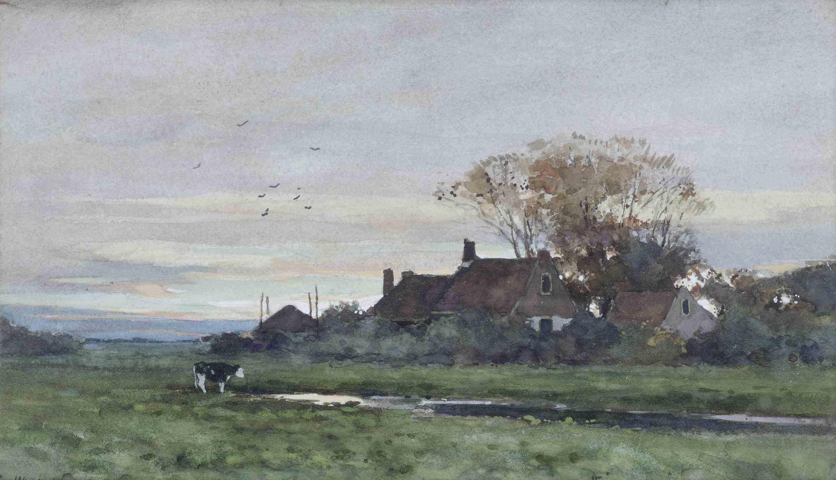 A cow near a farm at sunset