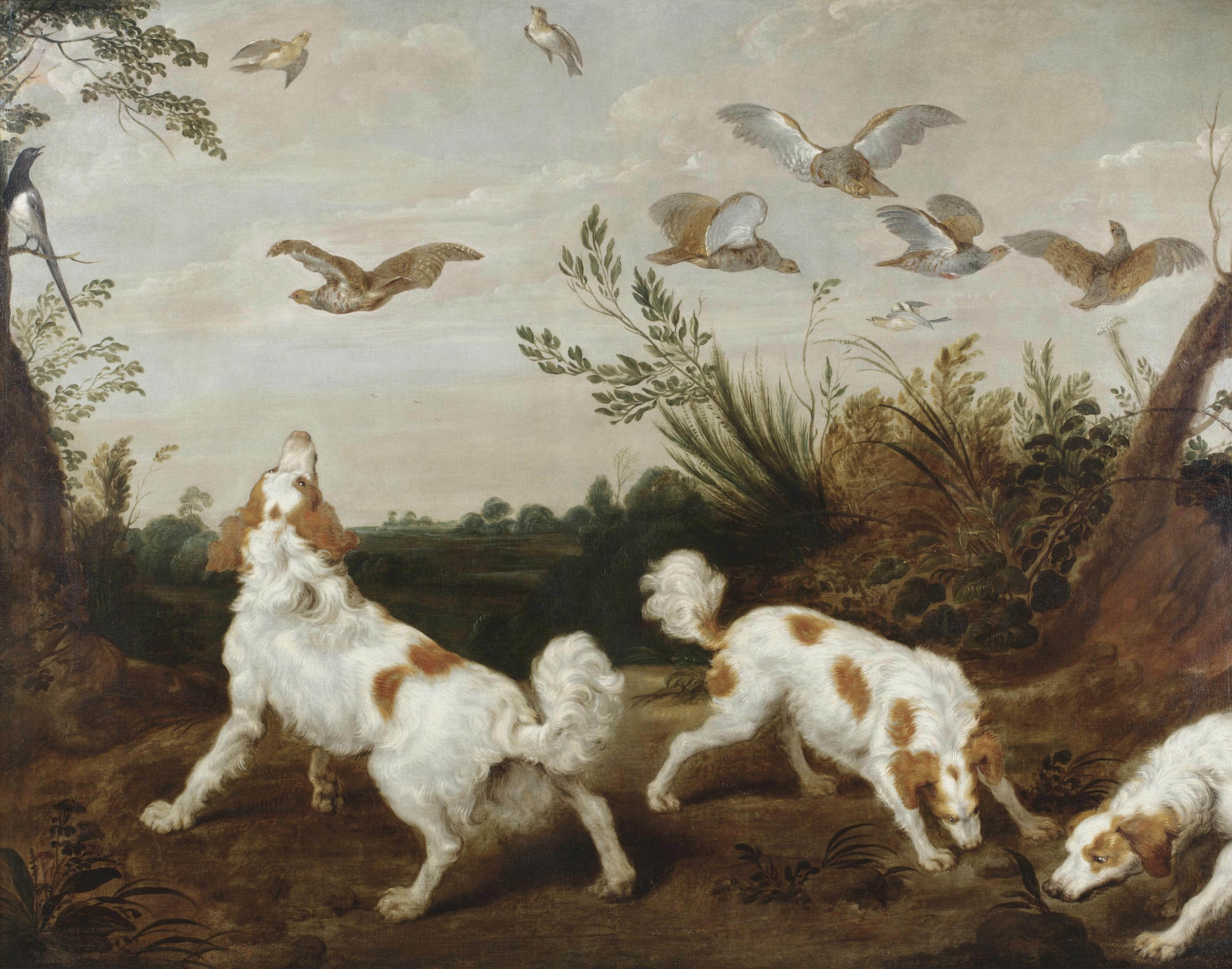 Three springer spaniels on the hunt for partridges
