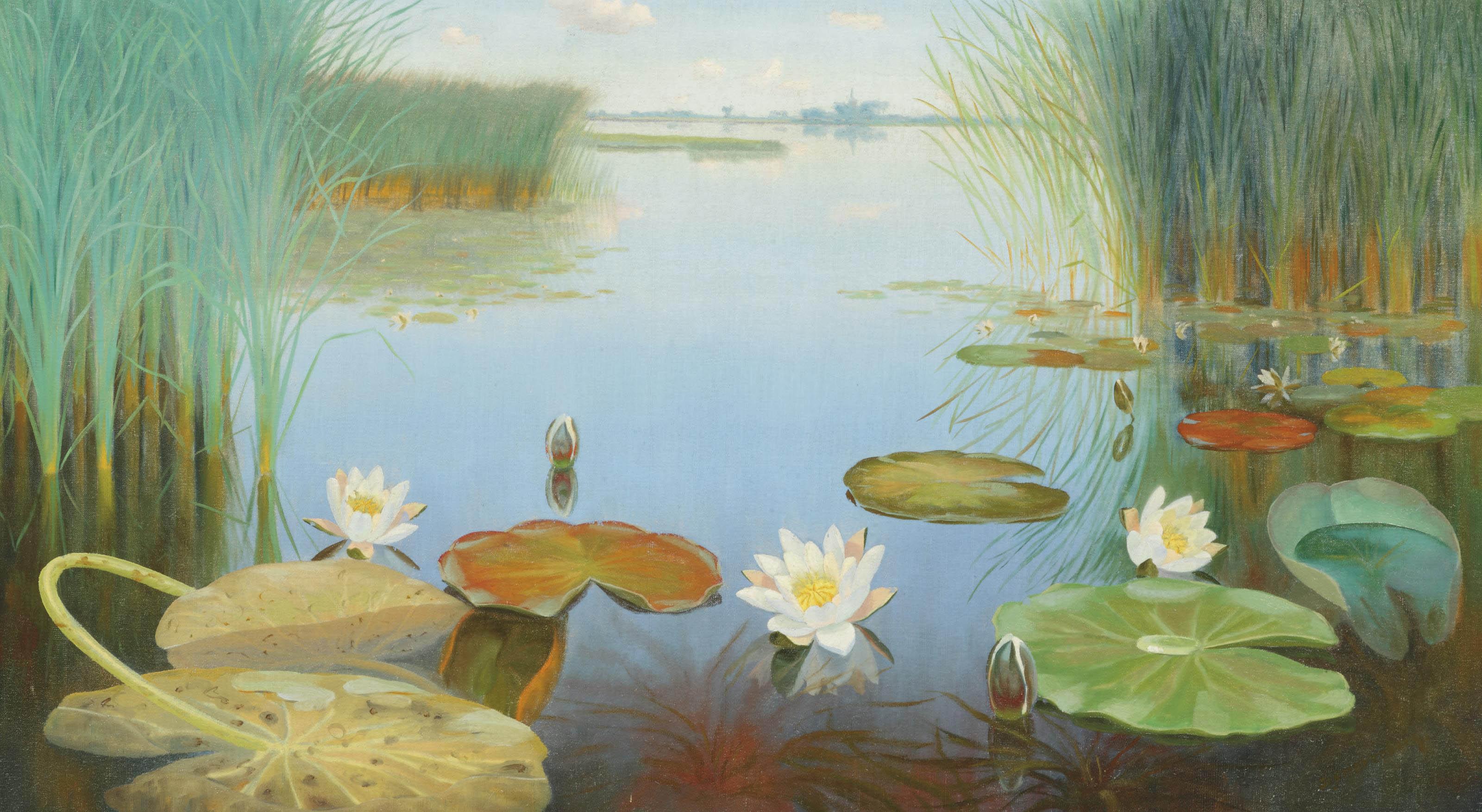 Water lilies in the Loosdrechtse plassen