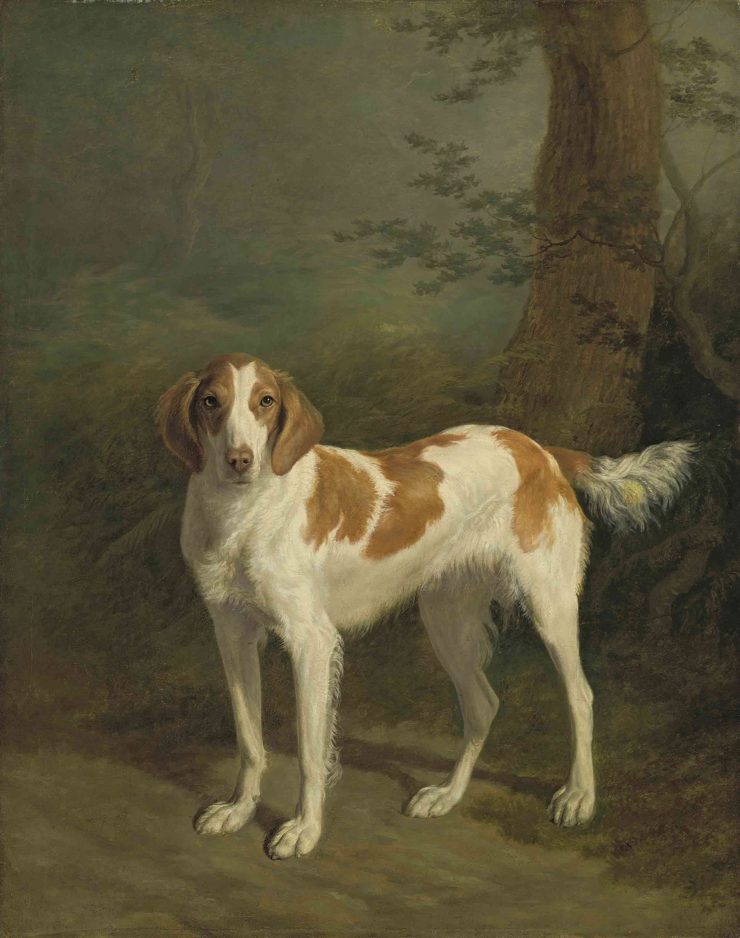 Dash, a setter in a wooded landscape