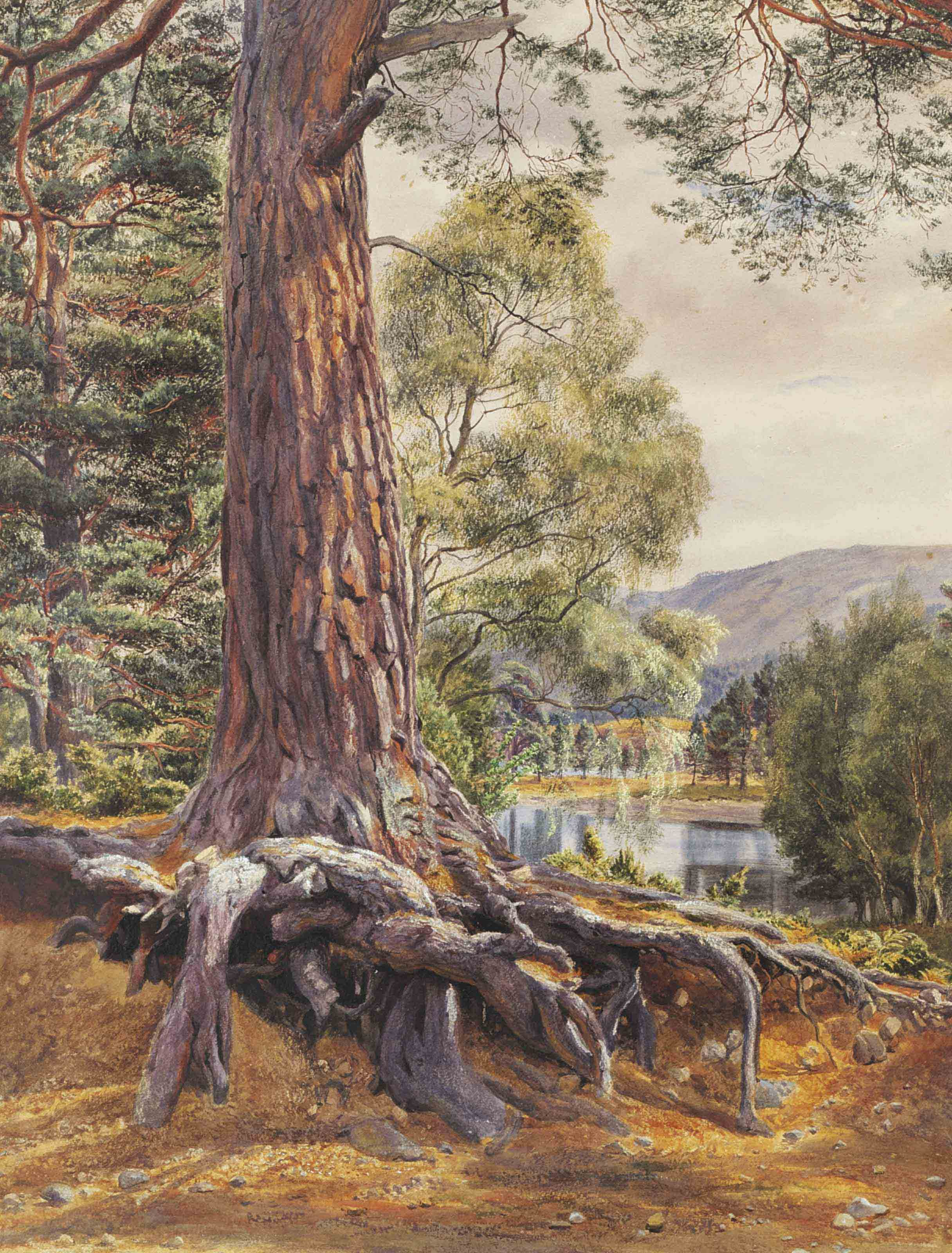 A river landscape with a conifer in the foreground