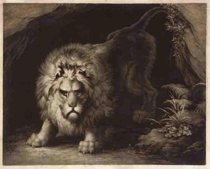 James Daniell (c.1771-1814), After J. Graham , A Lion