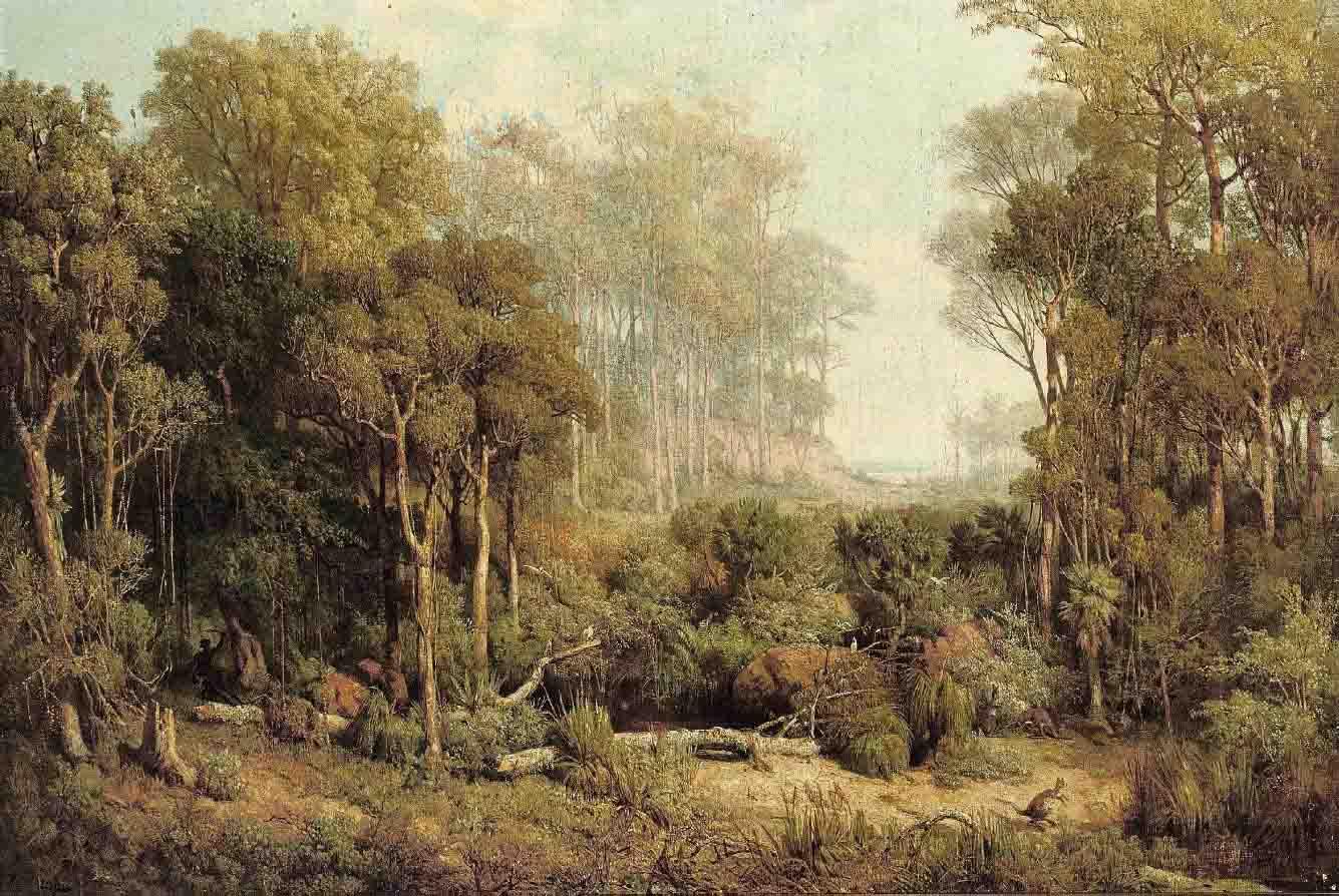 Australischer Wald. Character des Illawara Gebietes. [Australian forest in the Illawarra District]