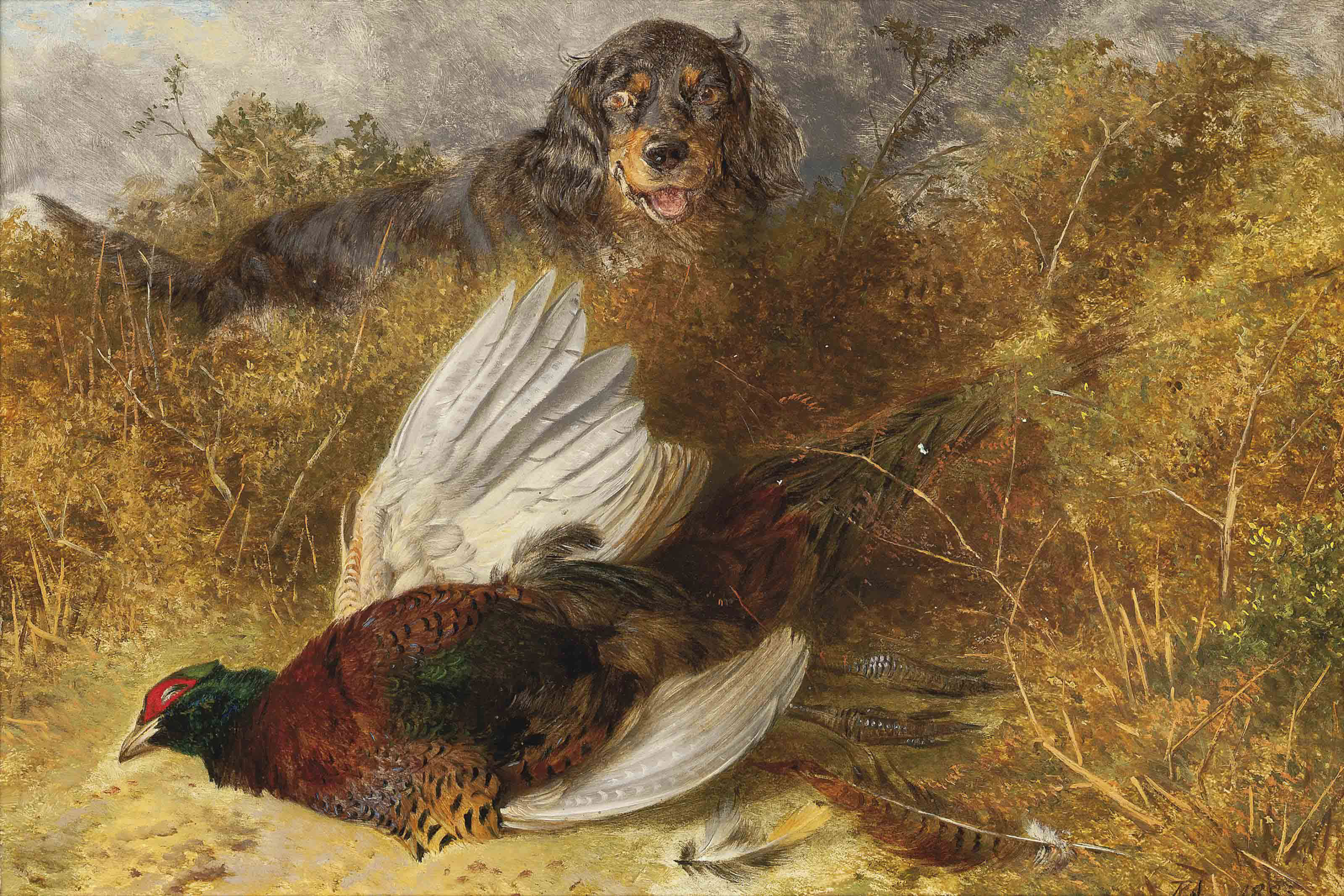 Gordon setter and pheasant