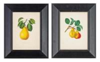 Six studies of Pears: Bon Chrétien Napoléon; Ananas; Émilie Bivort; Bon Chrétien Willam's; Beurré Delfosse; and Duc D'Orléans