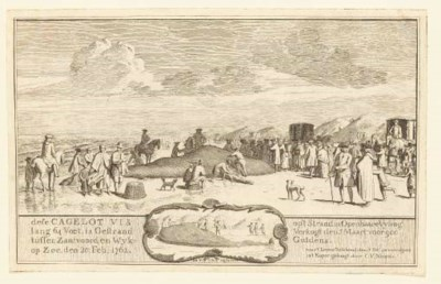 Cornelis van Kittensteyn (1600