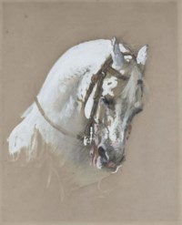 The head of a white horse