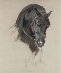 The head of a black horse