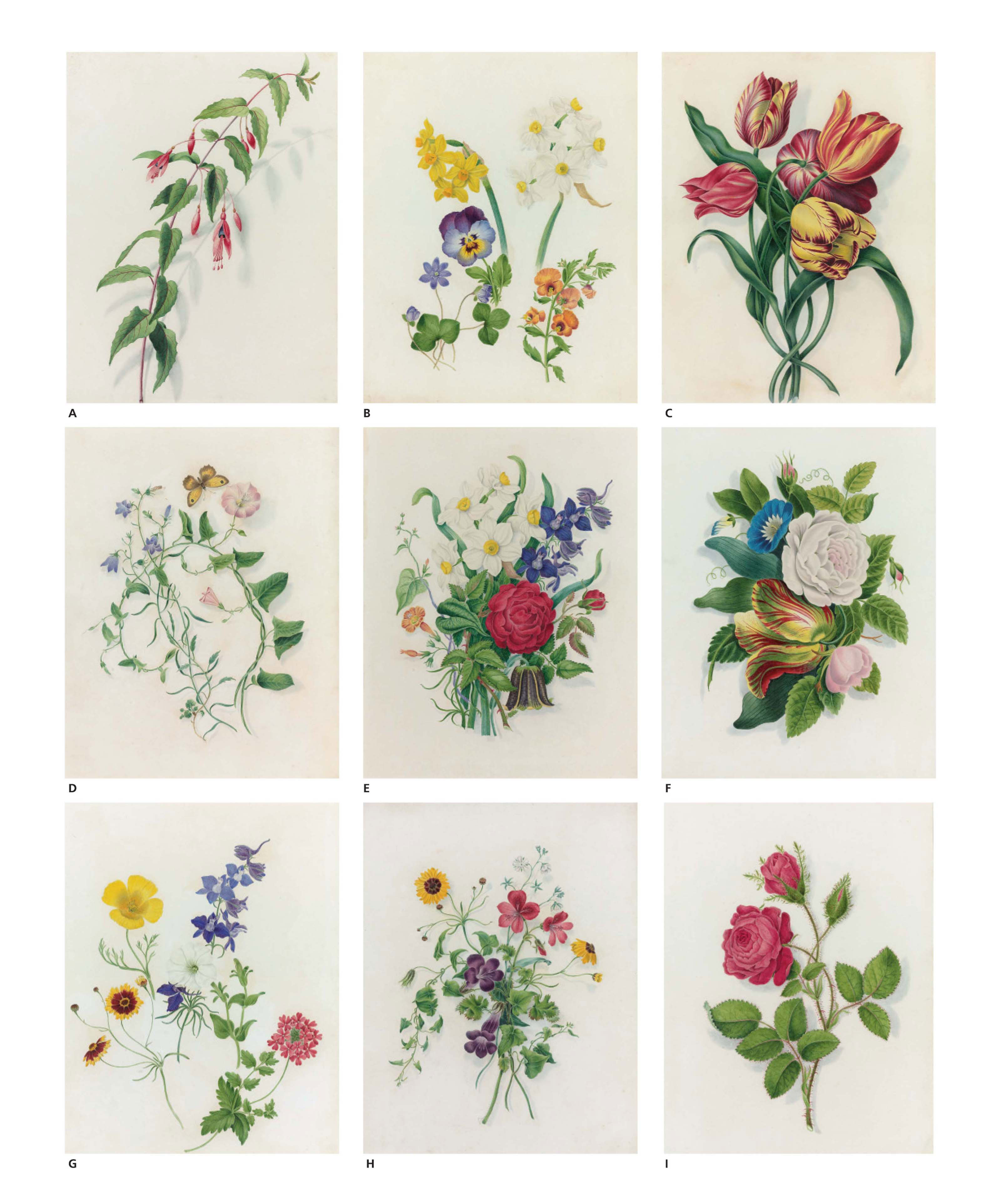 Nine botanical watercolours including: Fuschia (a); Narcissi and Pansies (b); Tulips (c); Convolvulus and Campanula (d); Narcissus with Roses (e); Tulips, Roses and Convolvulus (f); Marigold, Poppy, Petunia and Verbena (g); Bloody Cranesbill and Streptocarpus (h); and Roses (i)