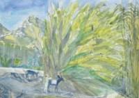 Reeds and Donkeys, Seriphos
