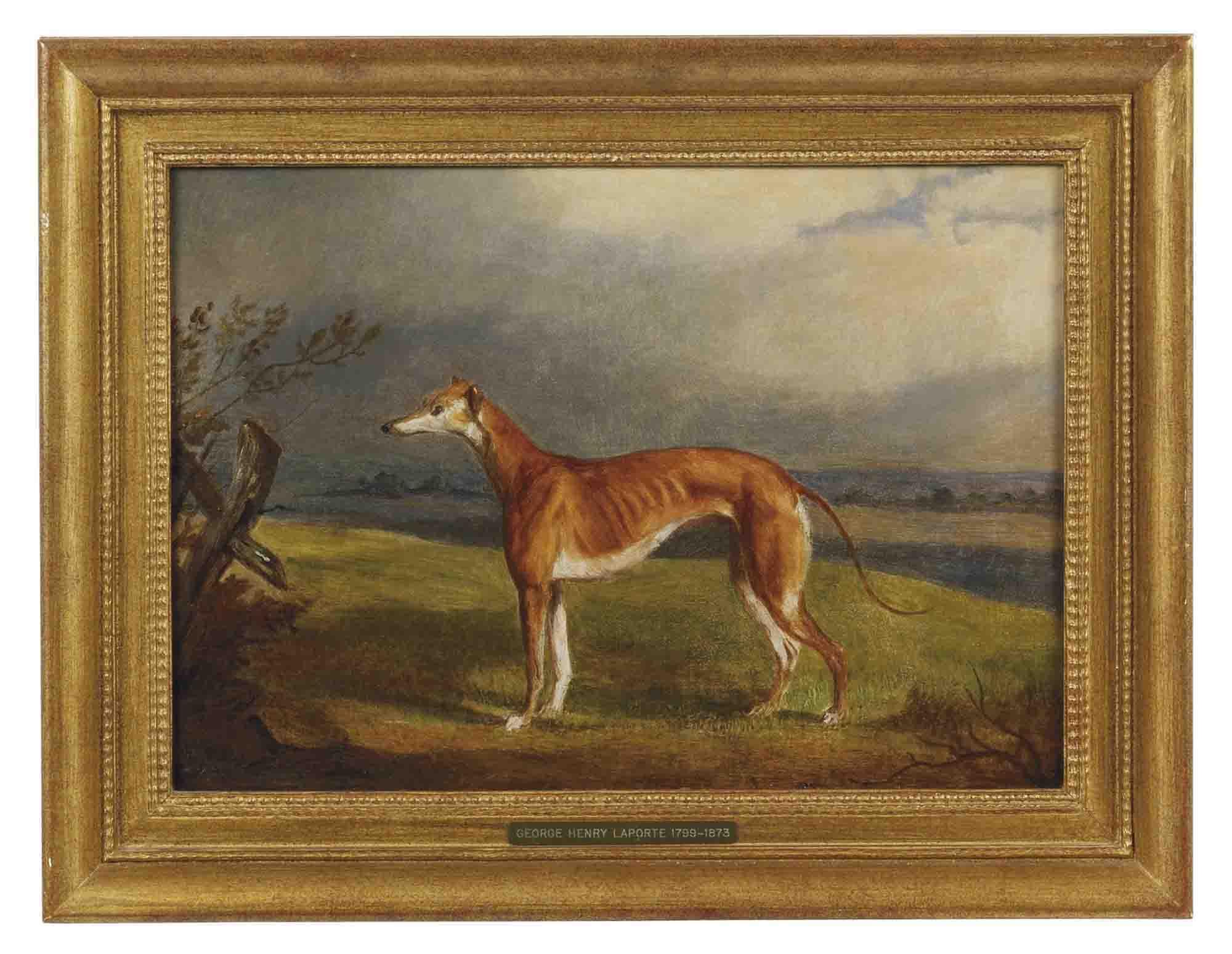 A greyhound in a landscape