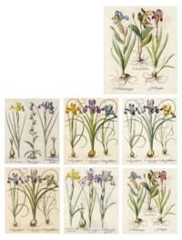 Hortus Eystettensis: Seven botanical plates