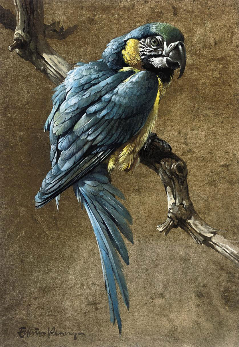 Blue macaw (illustrated); and Red and gold macaw