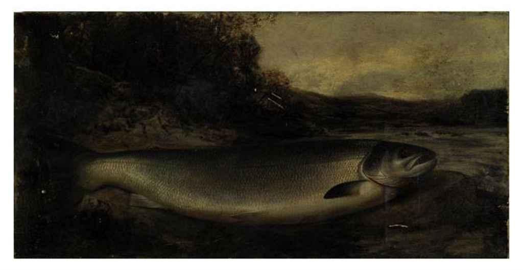 Salmon on a river bank