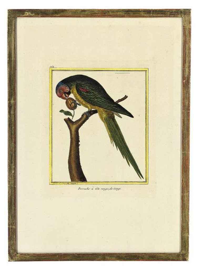 Studies of Birds from 'Histoire Naturelle des Oiseaux'