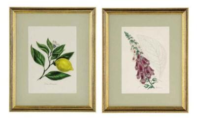 TEN LITHOGRAPH PRINTS OF FLOWE