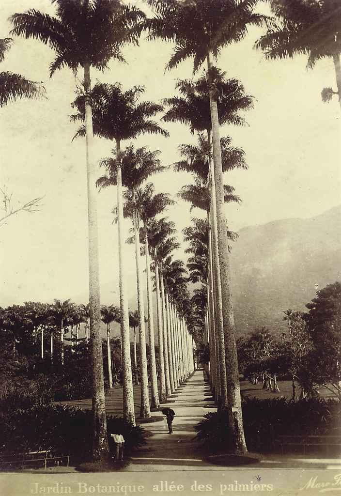 Entree de Rio; Jardin Botanique allée des palmiers; Botanical gardens; Pont de Sylvestre-rampe 25 and Corcovado - Chmin de l'aqueduc