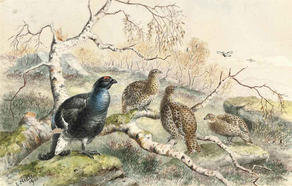 Pheasants; Ptarmigan; Partridge; and Grouse (illustrated)