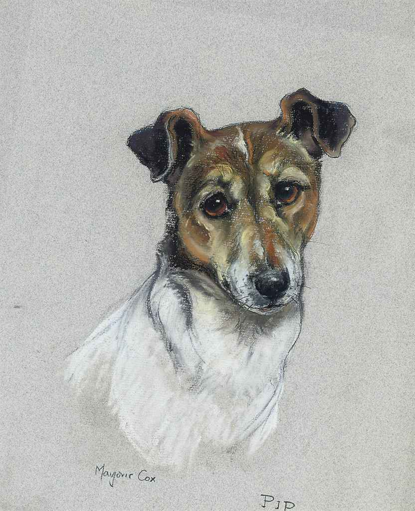 'Pip', the Jack Russell