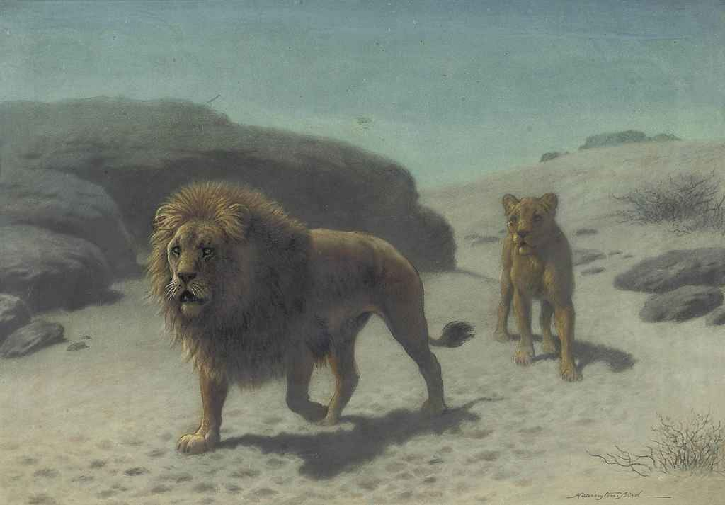 Harrington Bird (1846-1936) , A Lion And Lioness In The