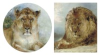 Resting lion; and Lioness