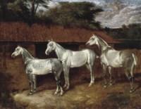 Three good greys