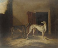 Two prize greyhounds