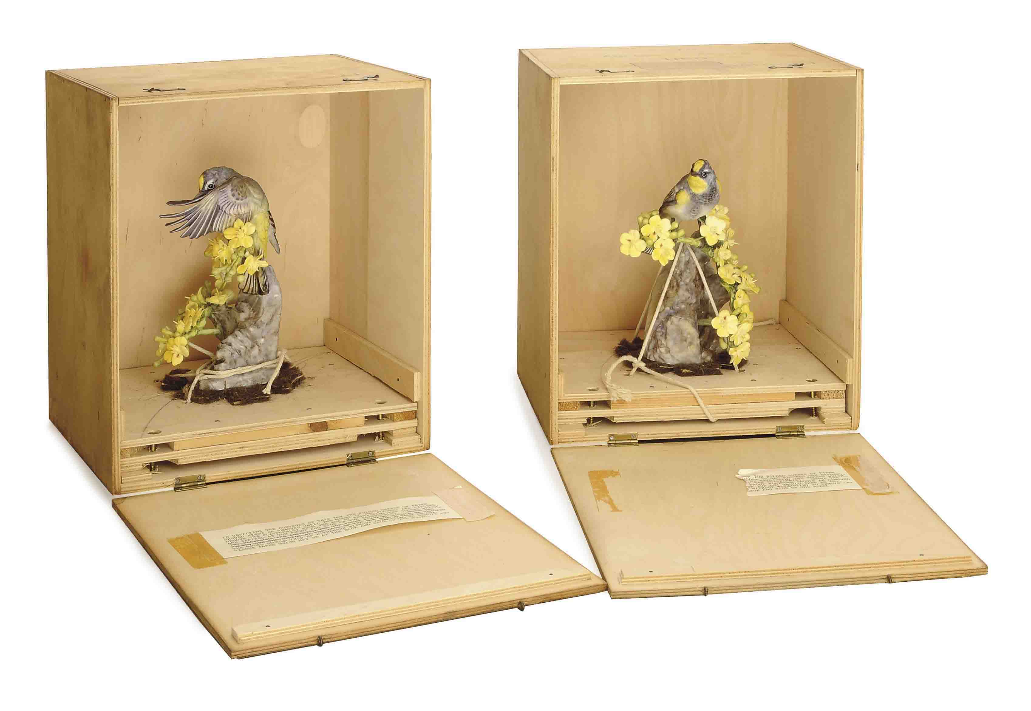 TWO PAIRS OF ENGLISH PAINTED PORCELAIN MODELS OF 'AUDUBON'S WARBLERS WITH PALO VERDI',