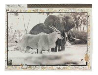 Bull Eland Passing Elephants Digging Water, near Kathamula Tsavo, North, for The End of the Game, February 1965
