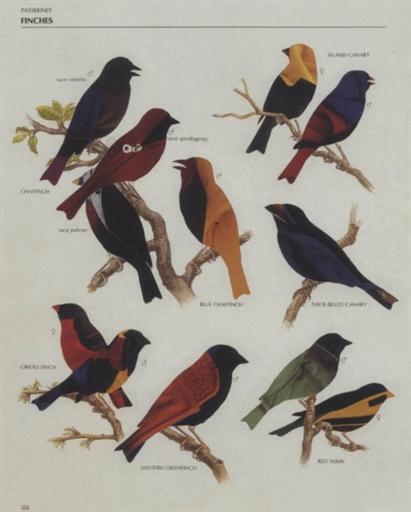 Study for Big Bird