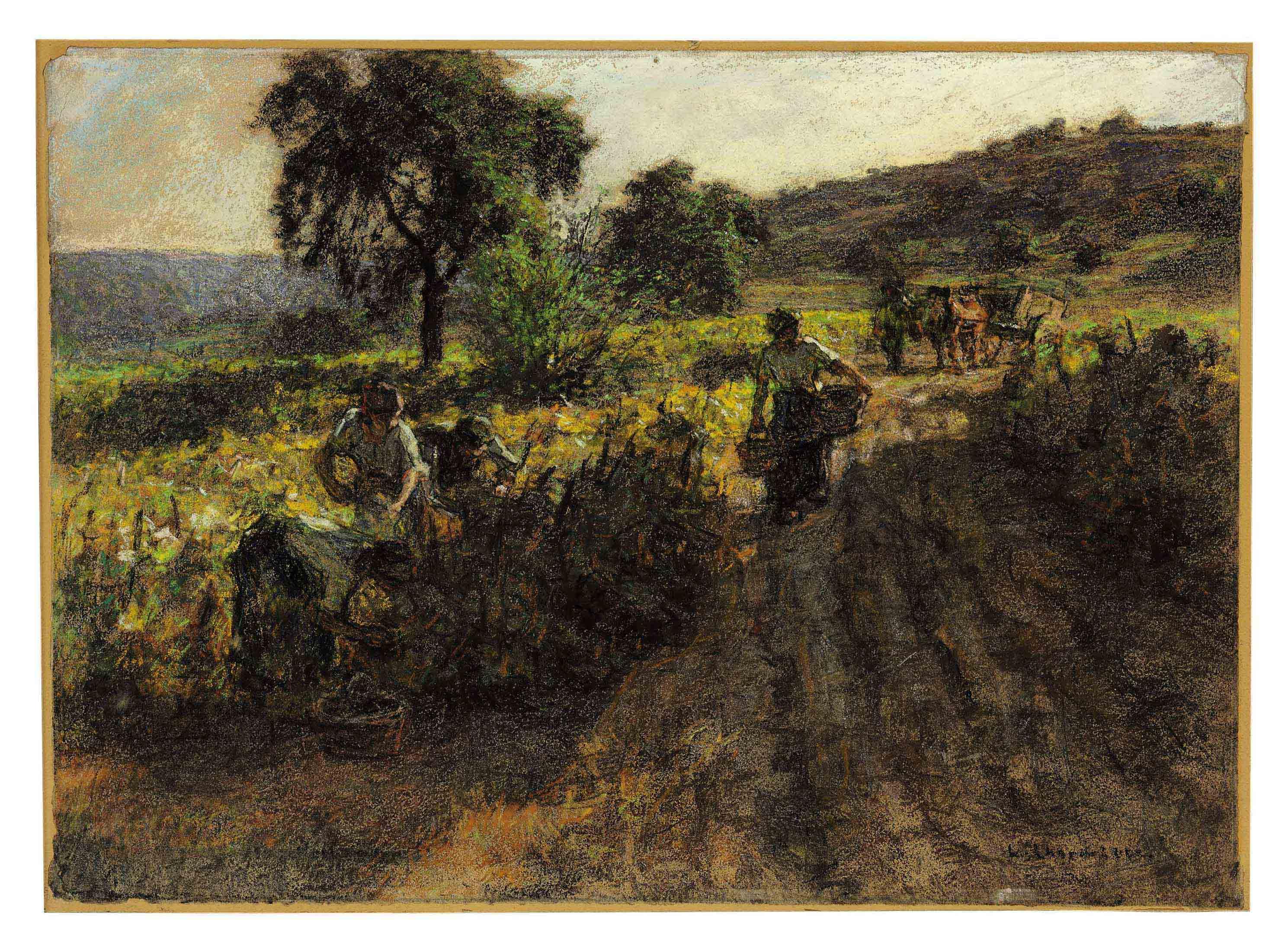 Les vignes au soleil