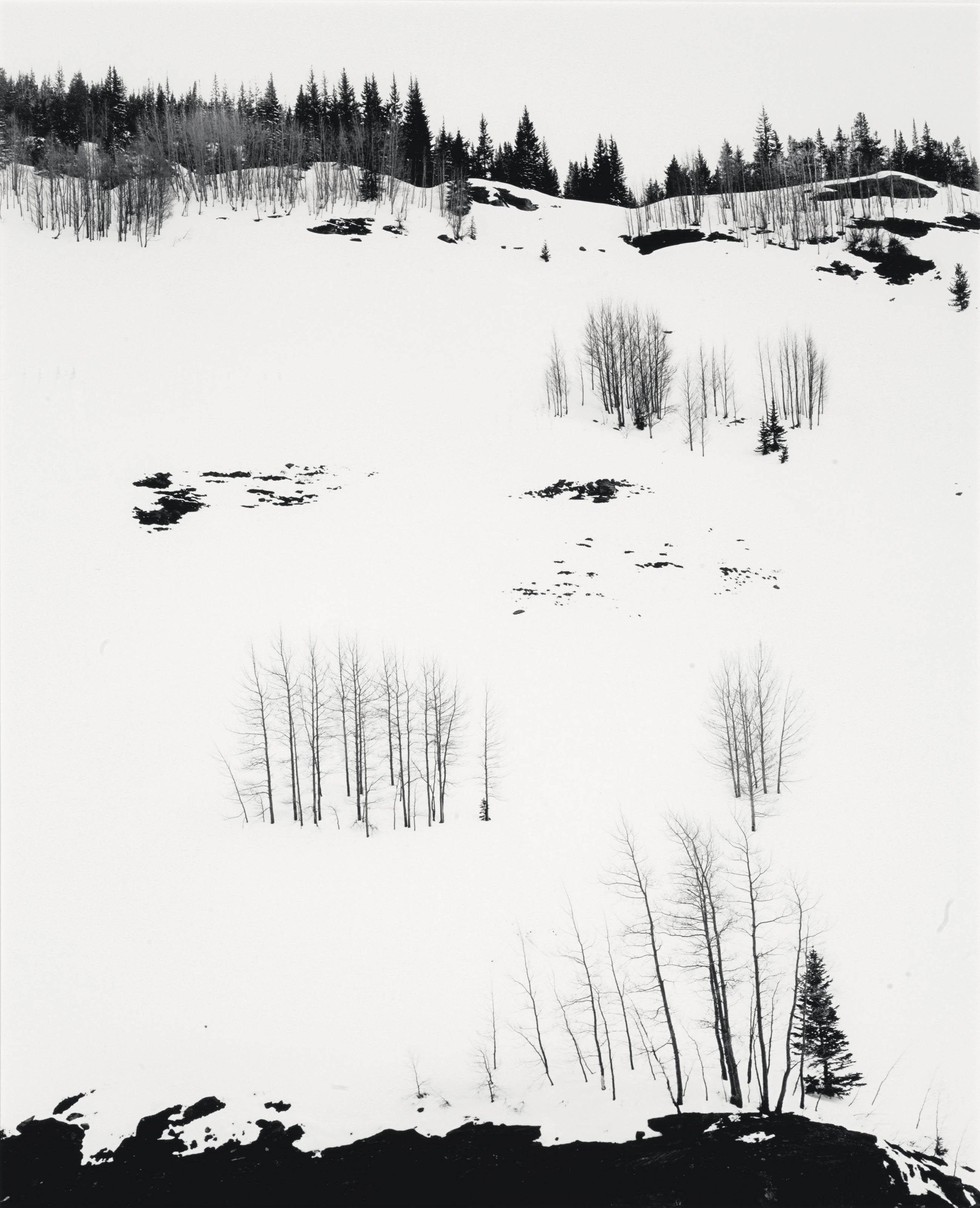 Aspen Trees and Snow, Colorado, 1957