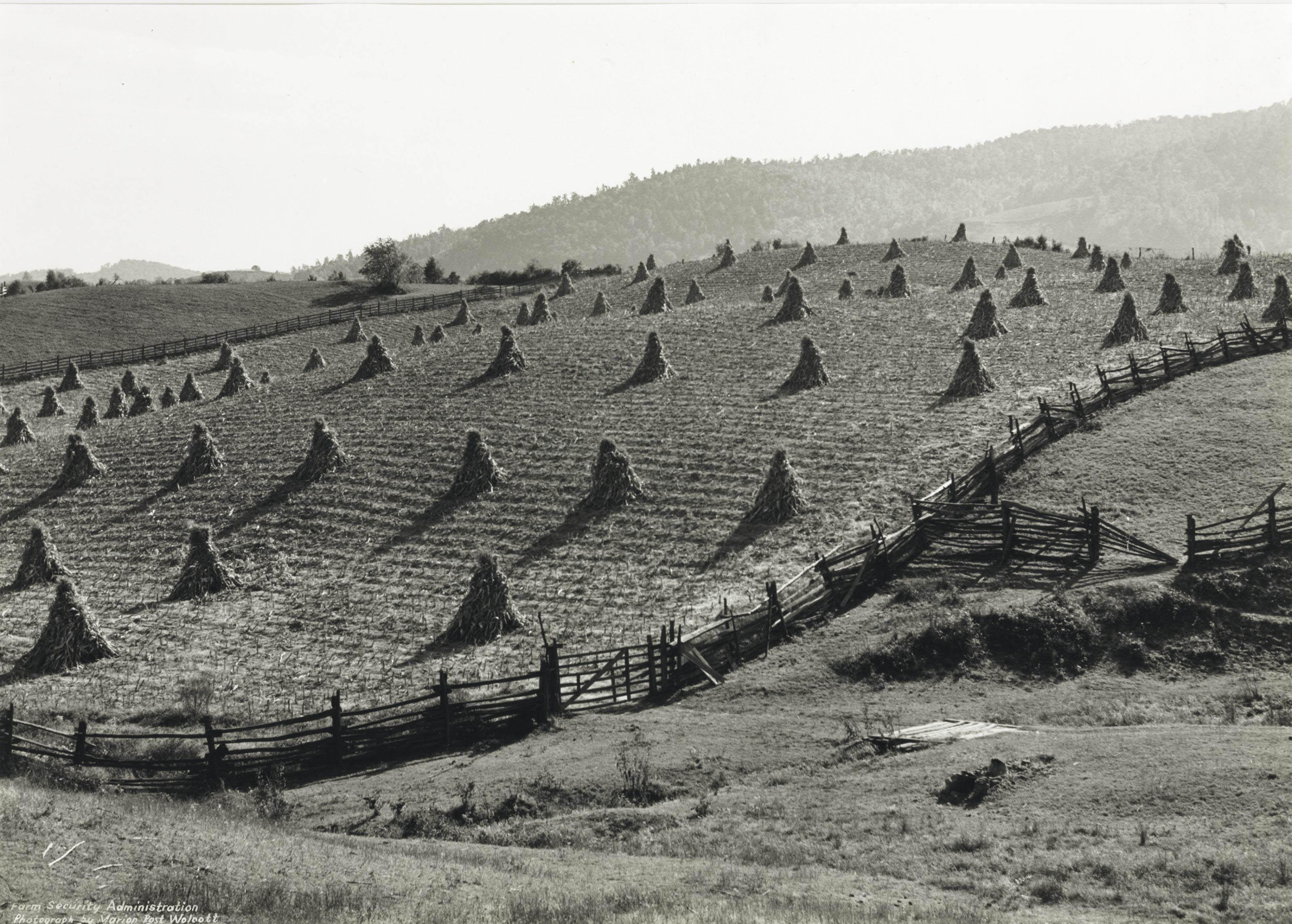 Split Rail Fences and Corn Shocks, near Marion, W. Va., 1939