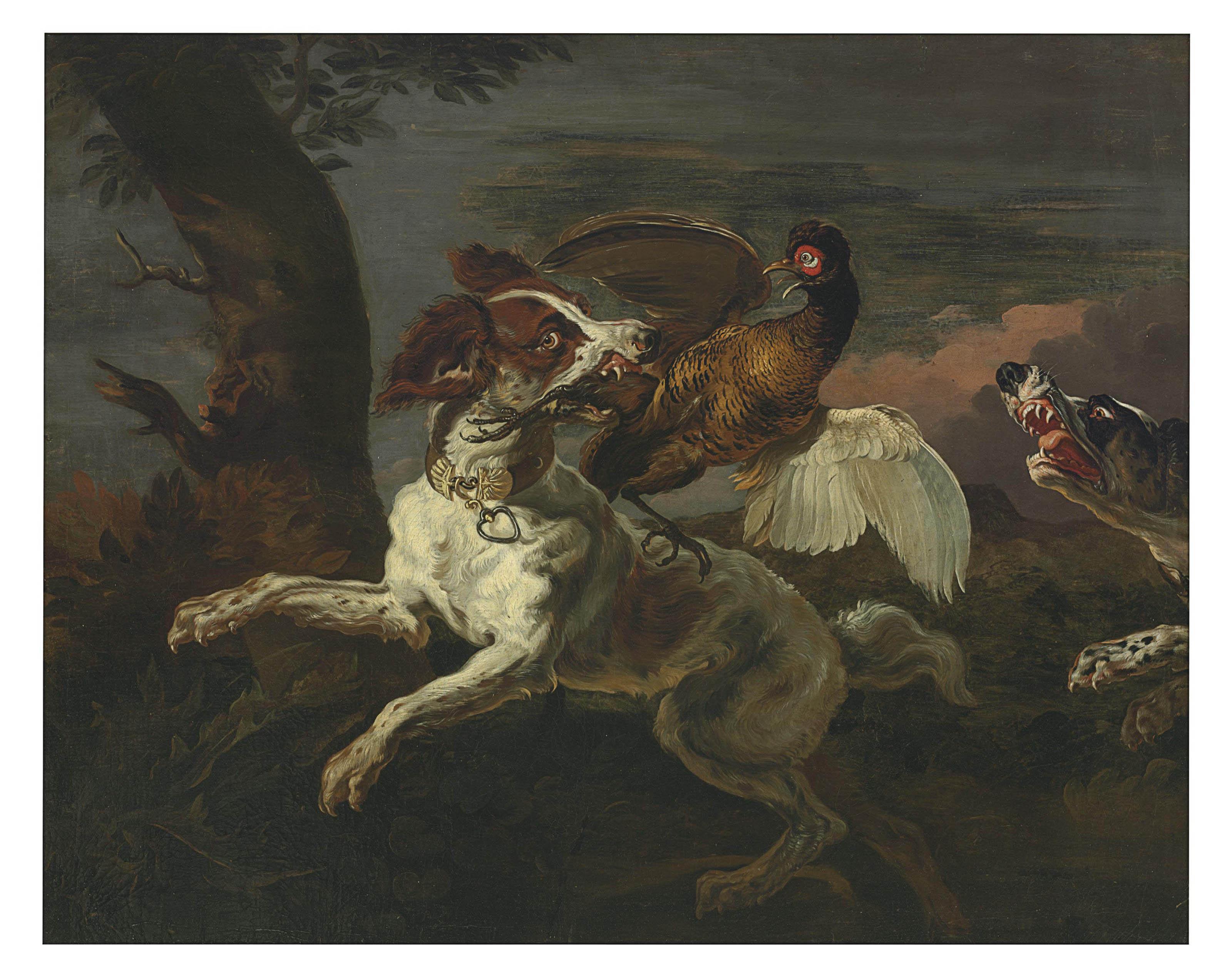A spaniel attacking a pheasant