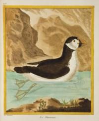 BUFFON, Georges Louis Marie Leclerc, comte de (1707-1788). [Histoire naturelle des oiseaux. Paris: Imprimerie royale, 1770-1786.]