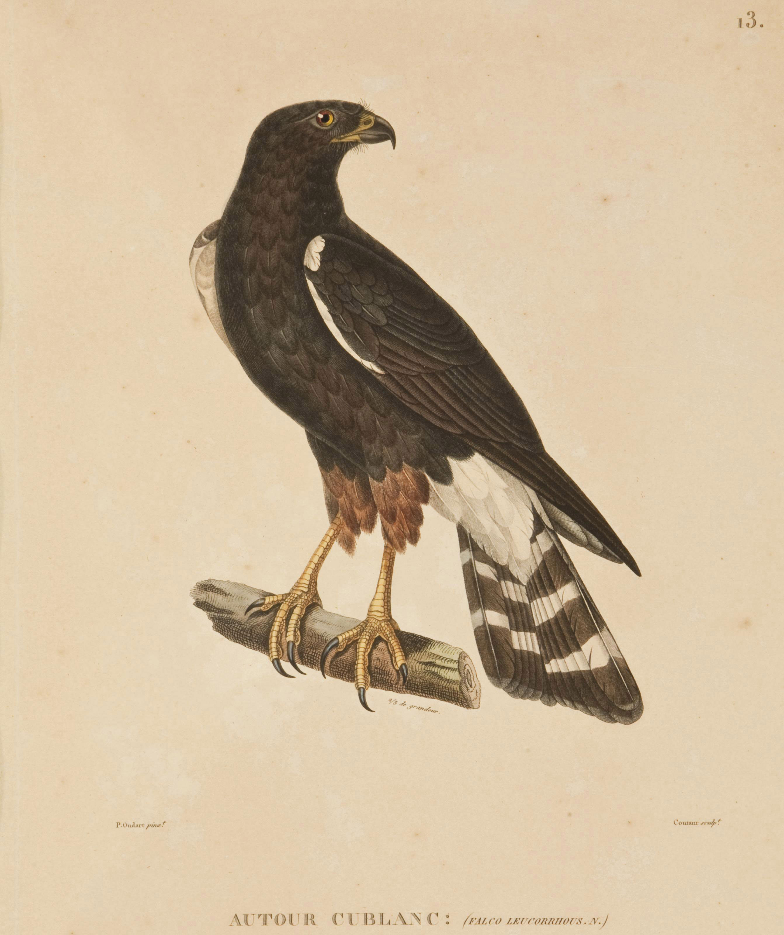 FREYCINET, Louis Claude Desaulses de (1779-1842). Voyage autour du monde. Atlas zoologique [seul]. Paris: Pillet, 1824 [-1826].
