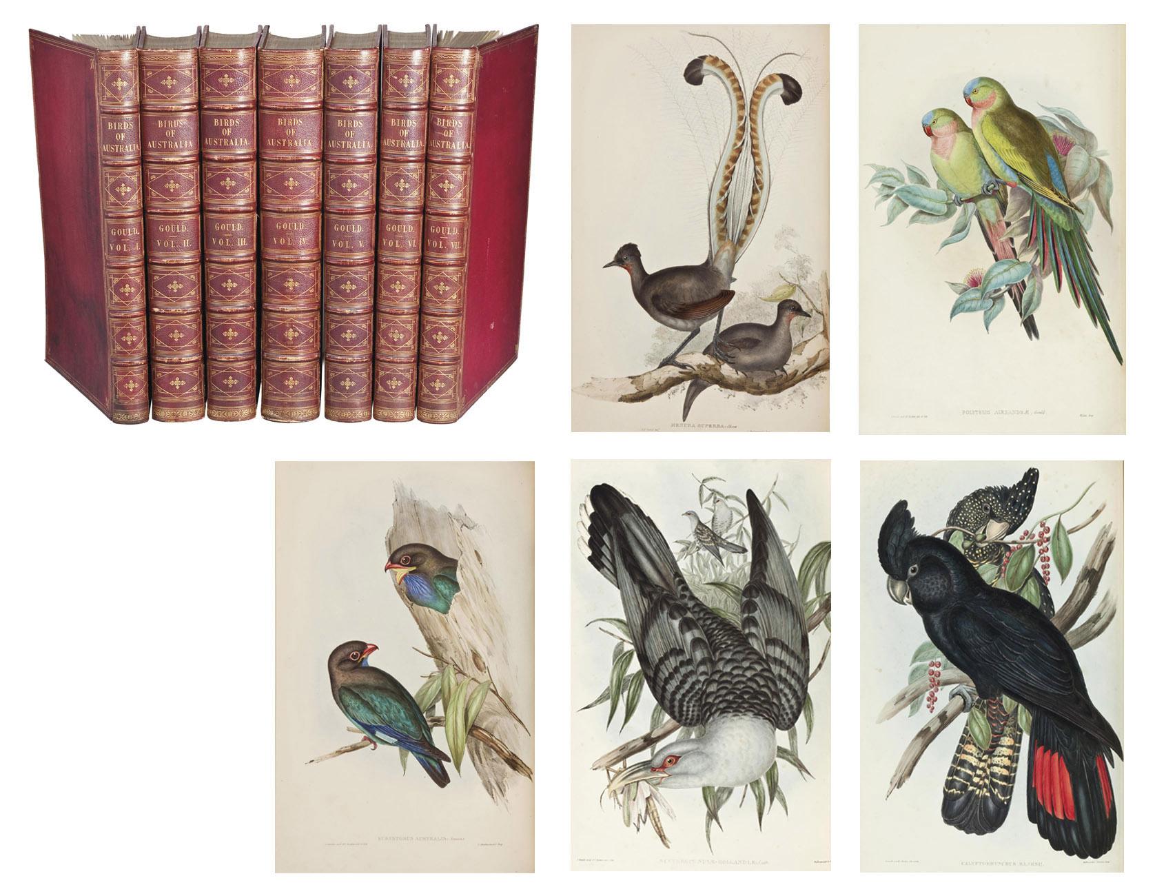 GOULD, John (1804-1881). The Birds of Australia. Londres:  Richard et John E. Taylor pour l'auteur, [1840]-1848-1869.