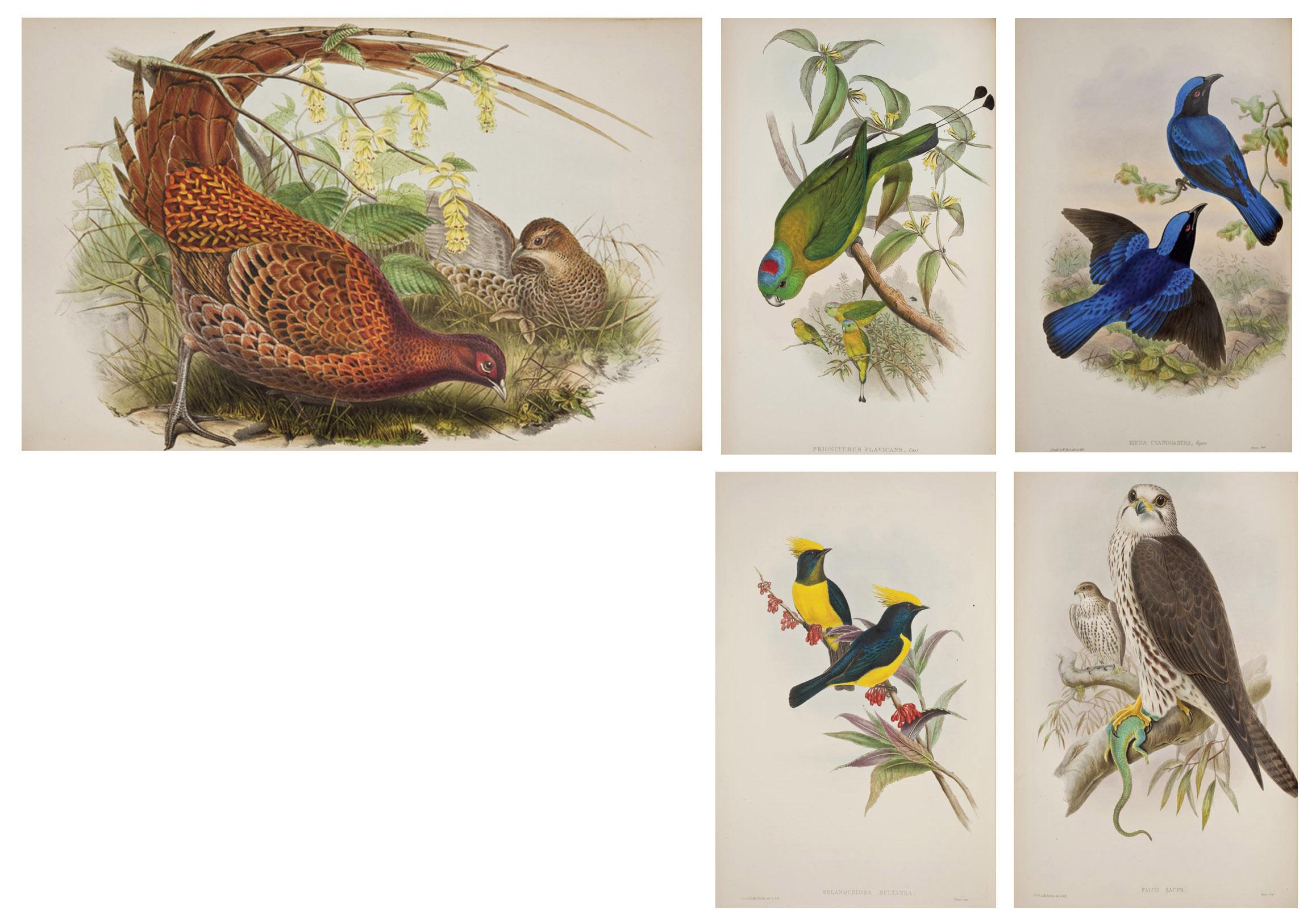 GOULD, John (1804-1881). The Birds of Asia. Londres: imprimé par Taylor et Francis, 1850-1883.