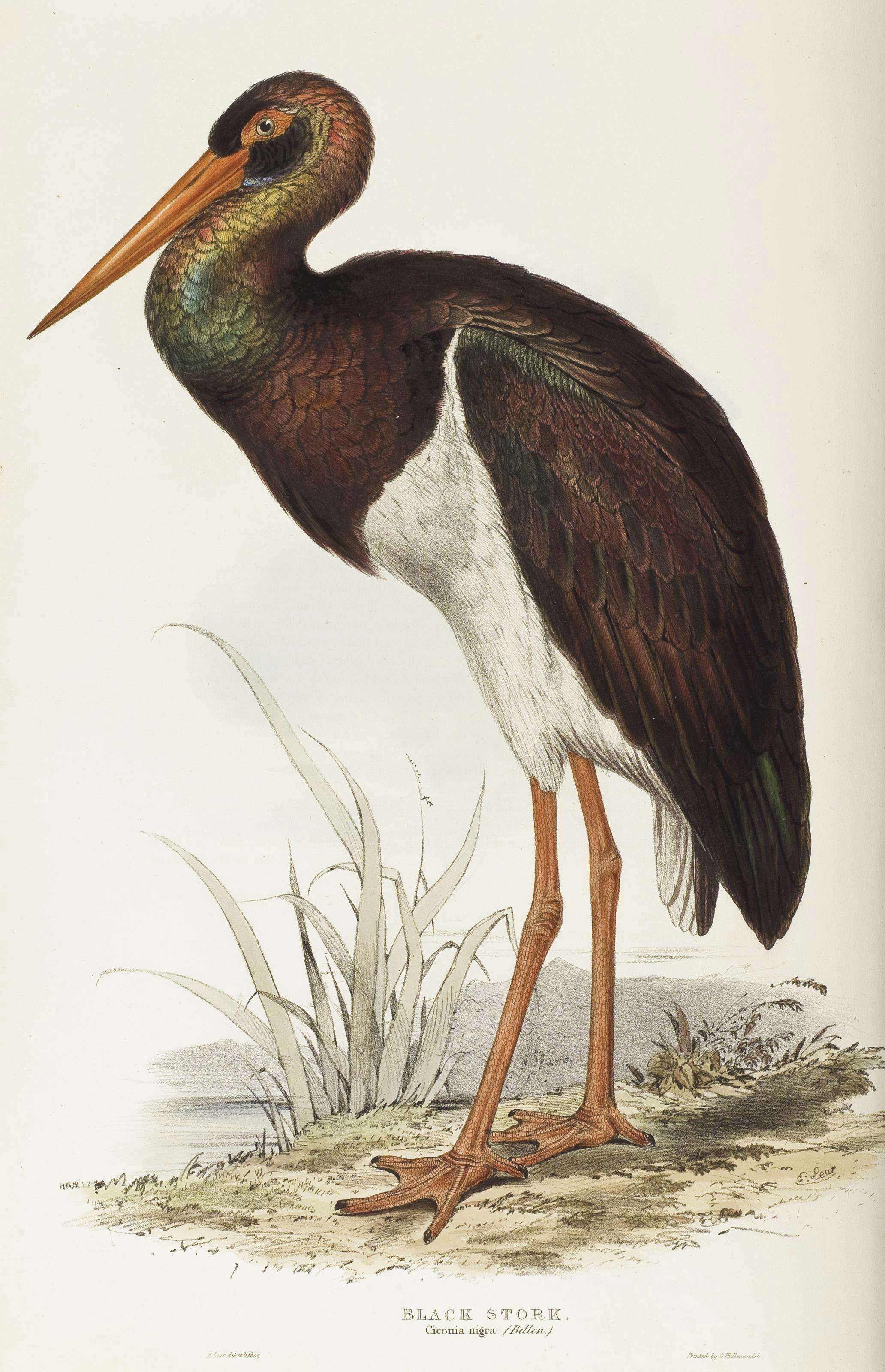 GOULD, John (1804-1881). The Birds of Europe. Londres: Richard et John Taylor pour l'auteur, [1832-] 1837.