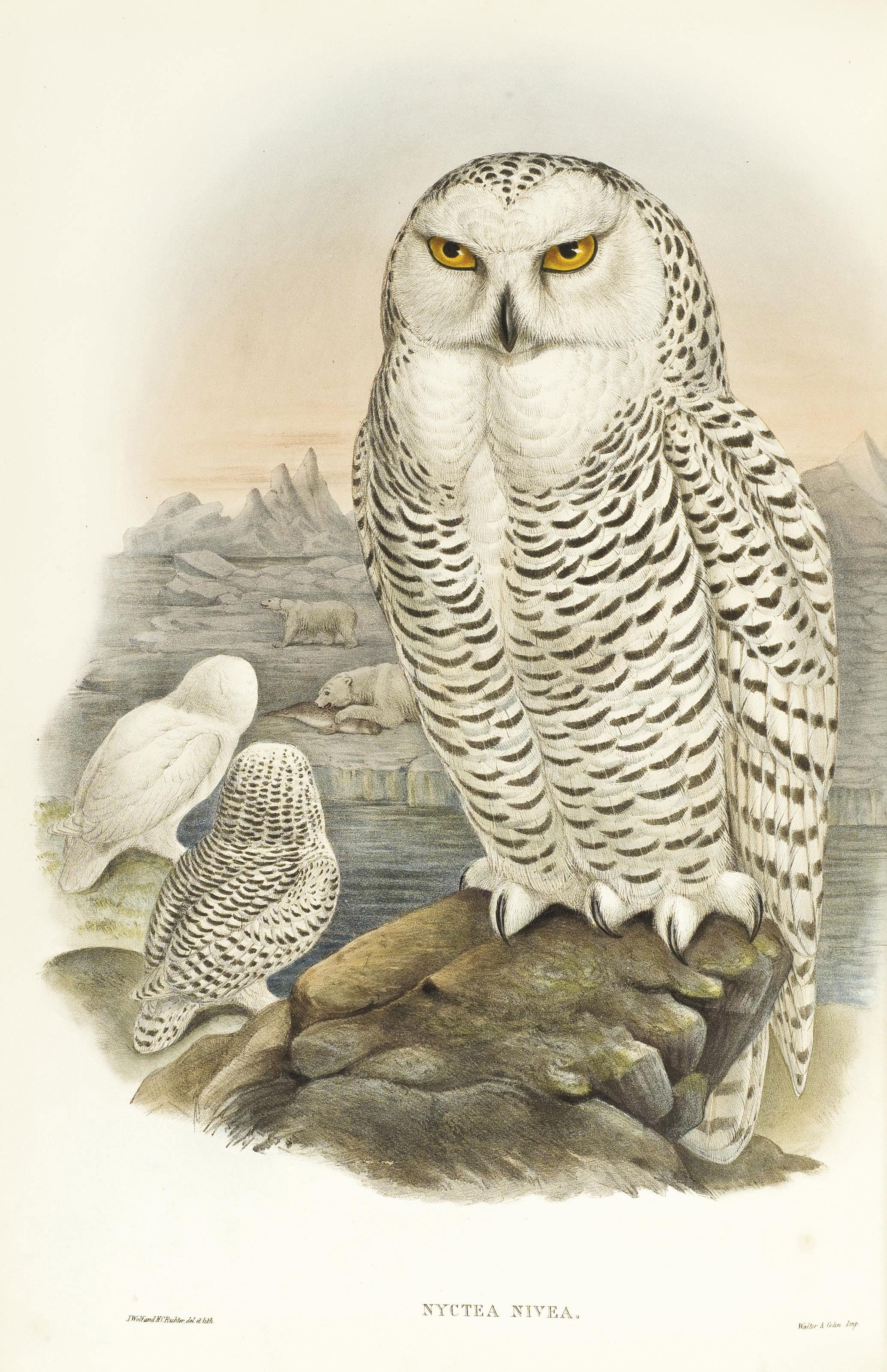 GOULD, John (1804-1881). The Birds of Great Britain. Londres: Taylor & Francis pour l'auteur, [1862-] 1873.