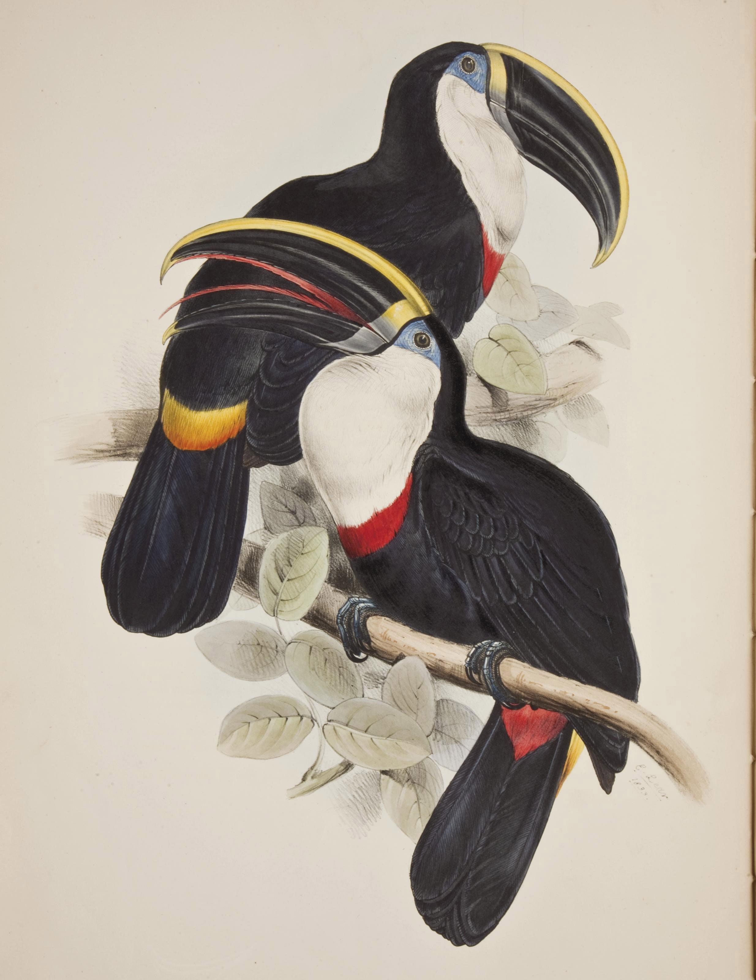 GOULD, John (1804-1881). A Monograph of the Ramphastidae, or Family of Toucans. Londres: pour l'auteur, [1833-] 1834.