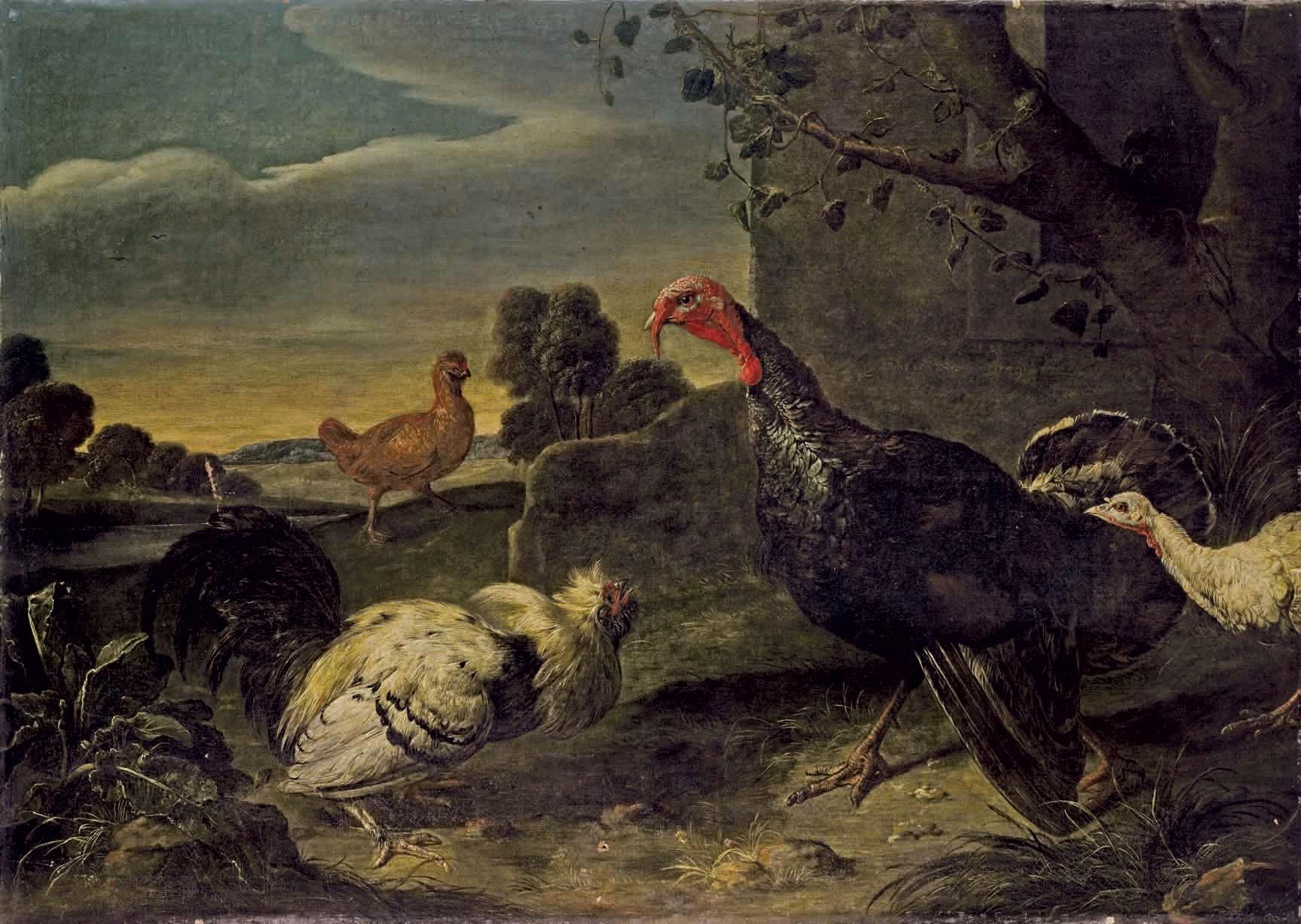 Dindons et poules