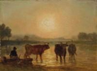 Vaches s'abreuvant au coucher du soleil