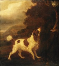 An English Springer Spaniel and a grey cat in a landscape