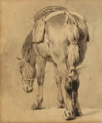 Study of a saddled horse